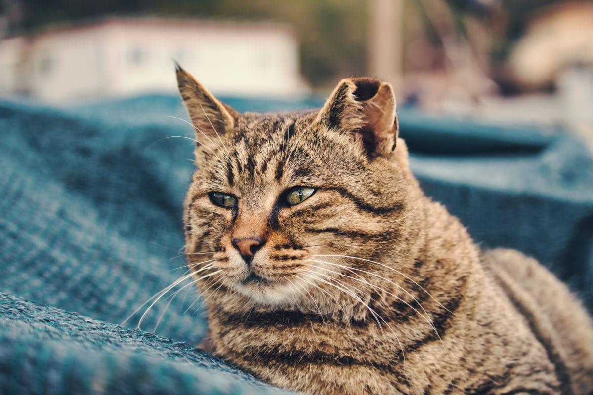 kočka domácí, hlava, portrét, koťátko, vousy, fajn, kočkovitá šelma, kotě