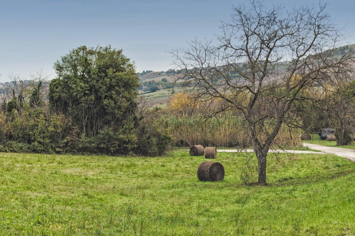 landbrug, felt, mäenrinne, vej, træ, halm, græs, landskab