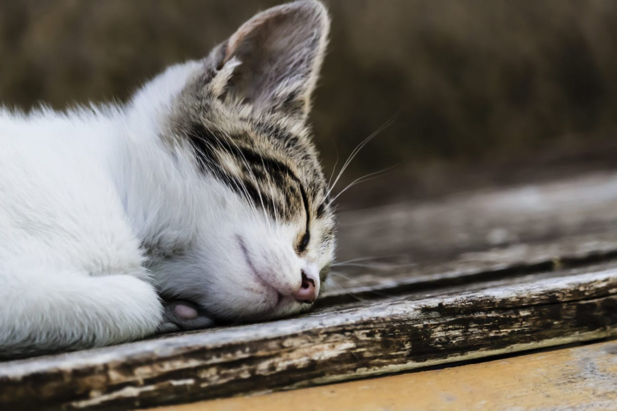 cat, feline, young, kitty, kitten, animal, Fur, cute