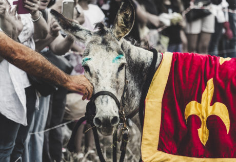 donkey, festival, holiday, outdoor, animal, people, religion, battle