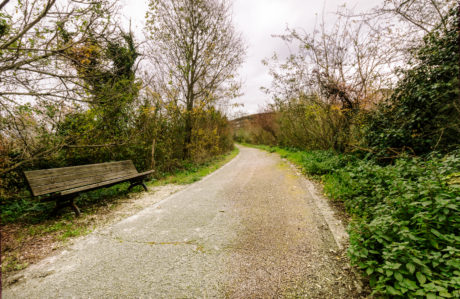 asfalt, bänk, träd, landskap, väg, naturen, trä, gräs