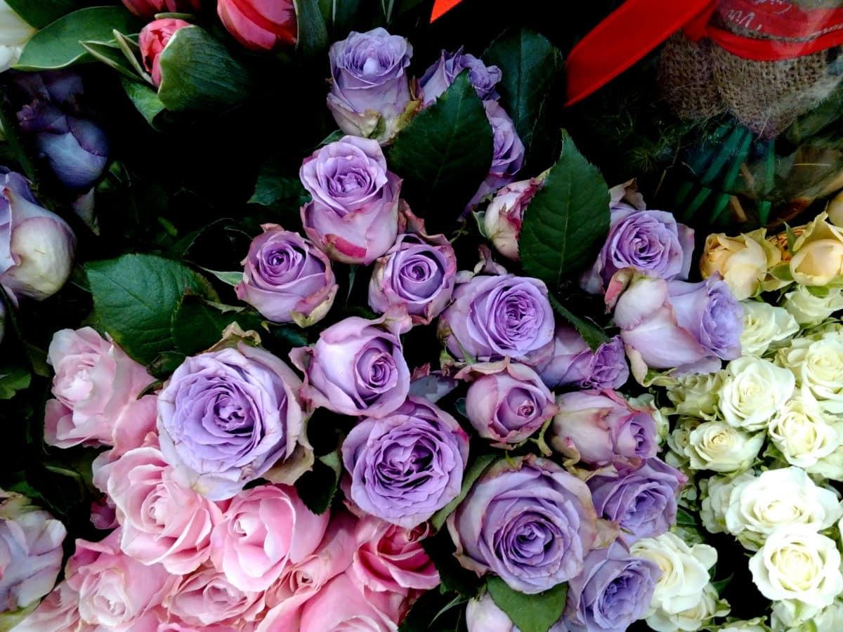 nousi, ruusunpunainen, ruusut, järjestely, kukka, terälehti, morsian, vaaleanpunainen