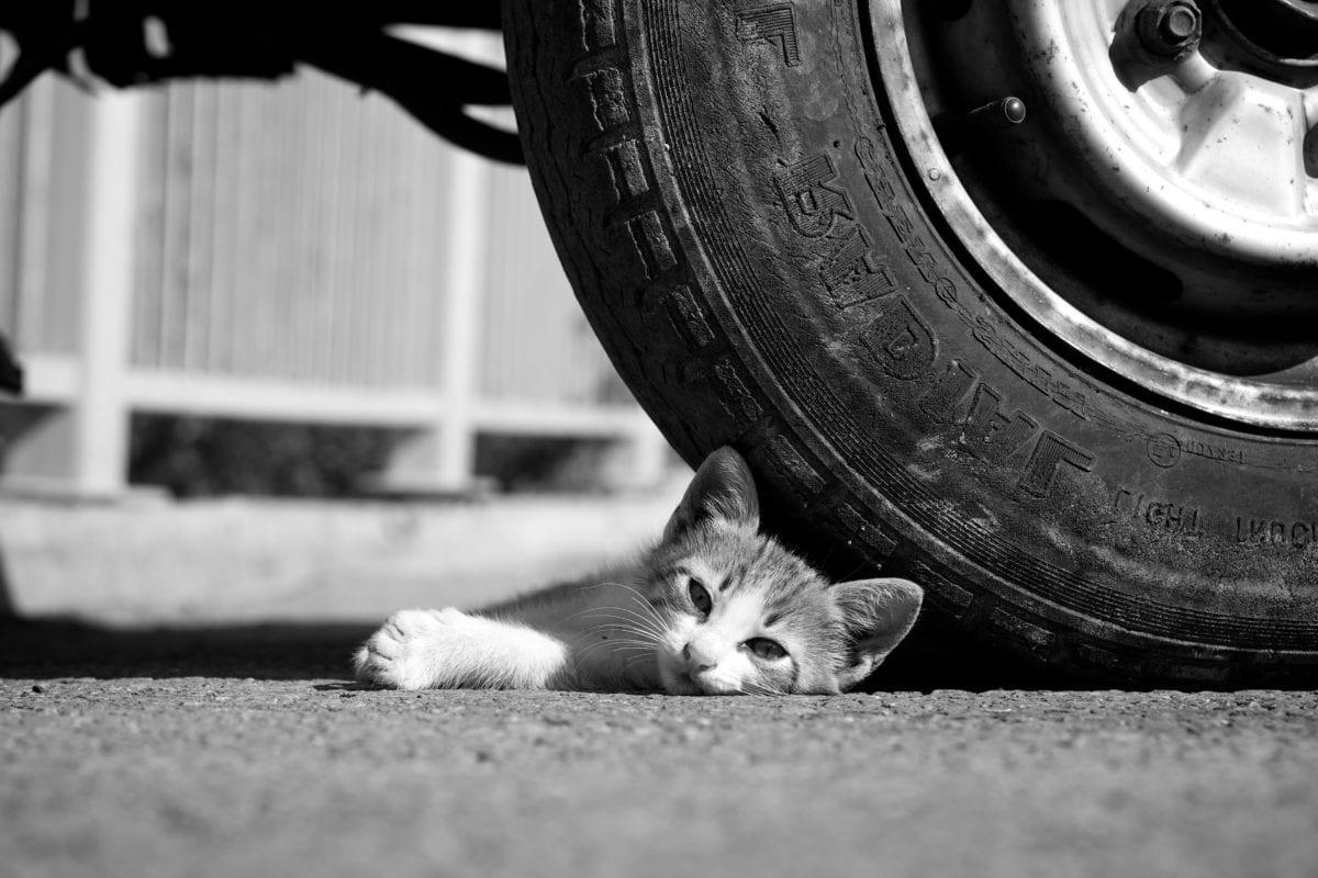 гума, котка, котешки, монохромен, улица, портрет, хора, кола