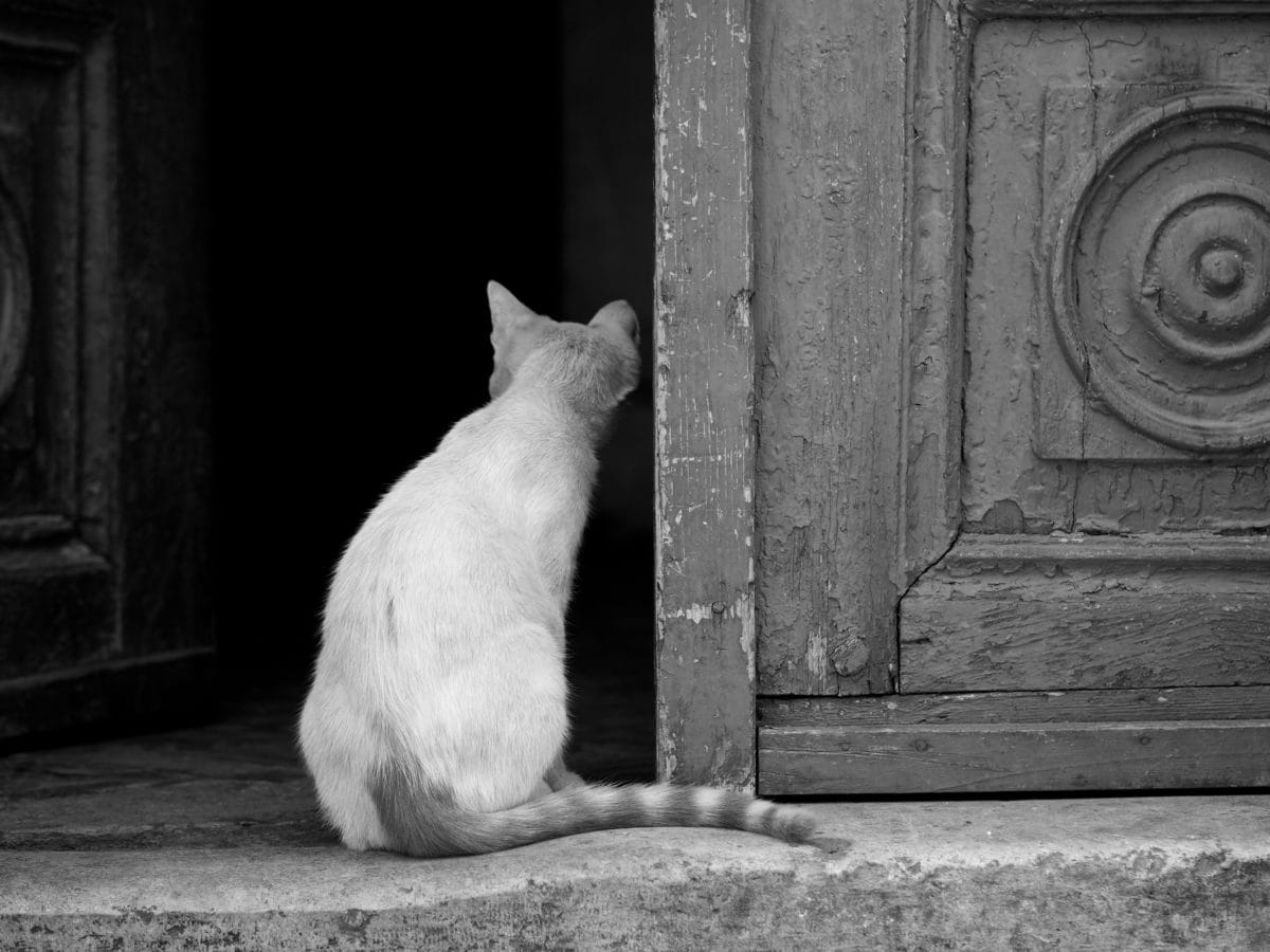domestic cat, front door, cat, portrait, animal, door, wall, street