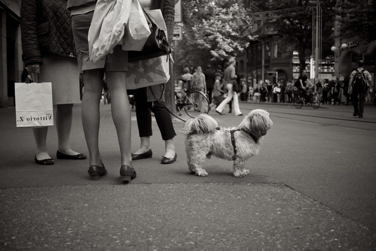 pes, psi, lidé, ulice, černobílý tisk, Žena, muž, psí