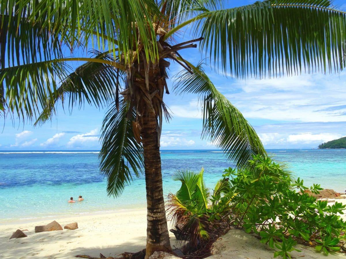 horizonte, tropical, arena, Playa, verano, Océano, Mar, coco