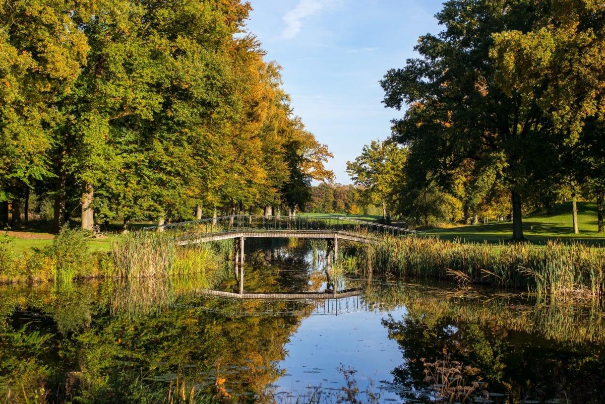 Río, Lago, agua, paisaje, árbol, bosque, naturaleza, hoja