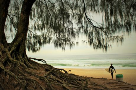 person, summer season, summer time, beach, shore, tree, water, sky