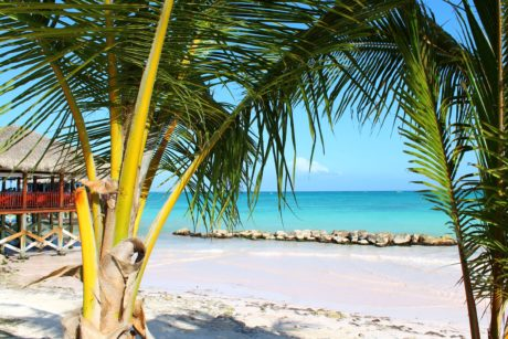 paradise, sand, ocean, sea, tree, coconut, tropical, beach