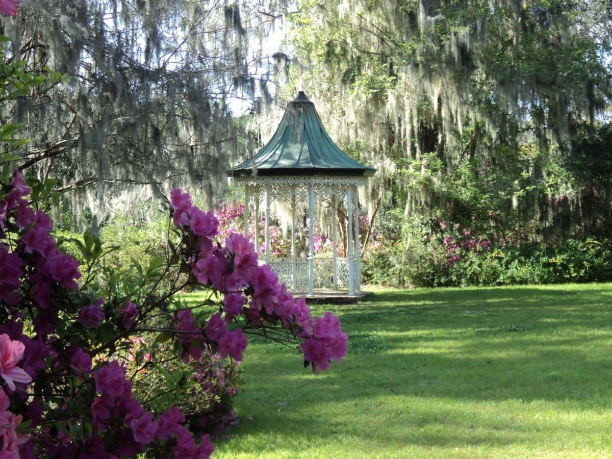 exteriér, zahrada, strom, květ, dřevo, Příroda, list, léto