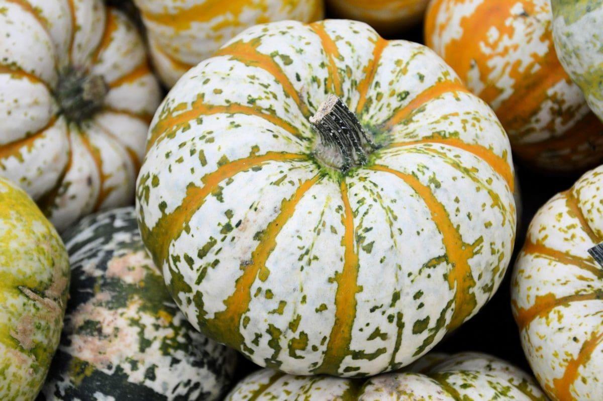 πολύχρωμο, κολοκύθα, τροφίμων, λαχανικό, αγορά, φυτό, το φθινόπωρο, φύλλο