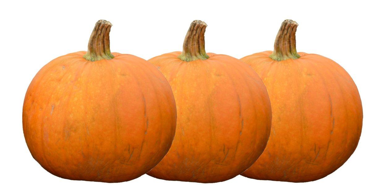 græskar, Thanksgiving, Halloween, efterår, vegetabilsk, mad, marked, landbrug