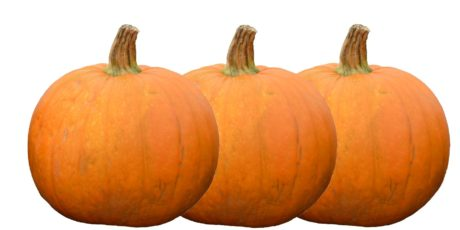 pumpkin, thanksgiving, Halloween, autumn, vegetable, food, market, agriculture