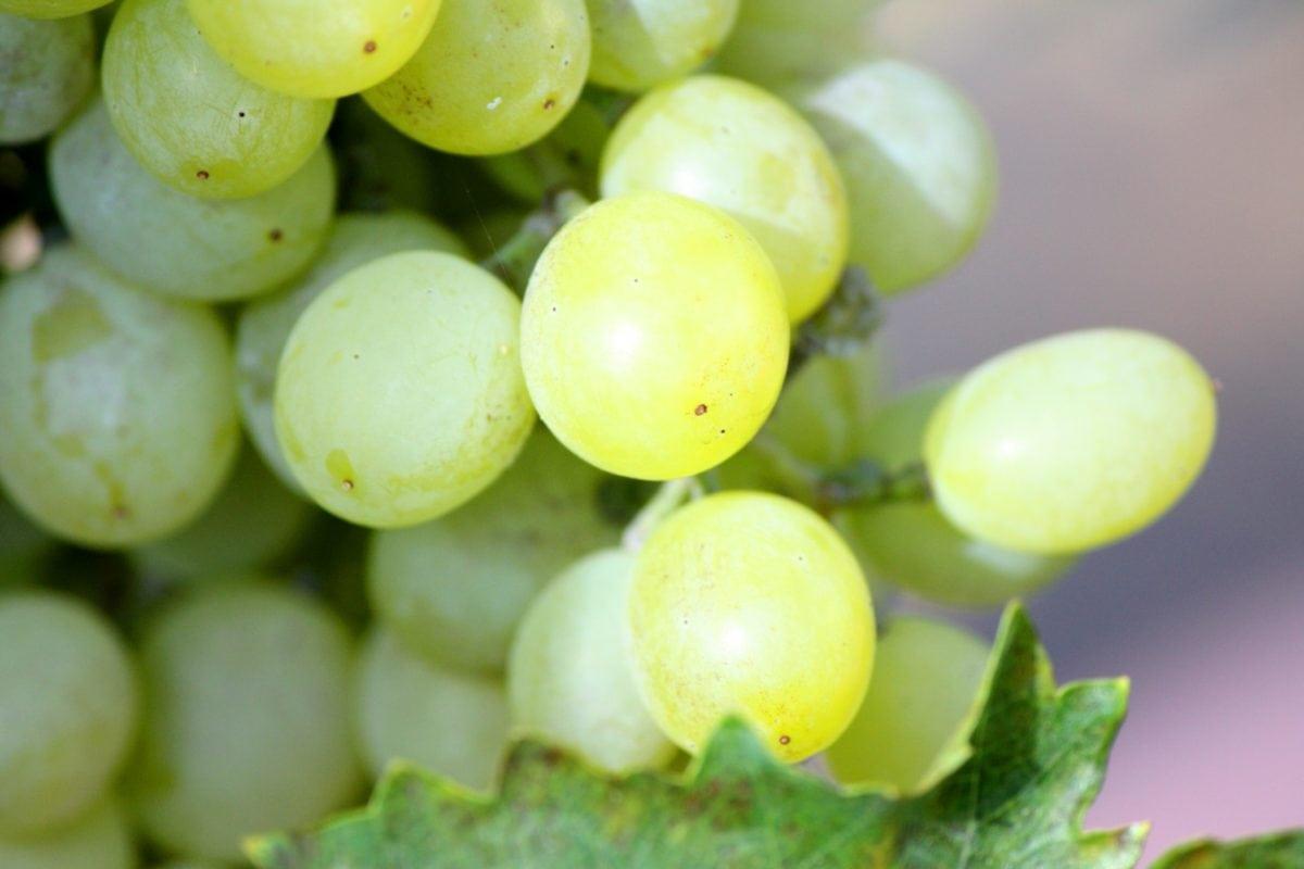 자연, 음식, 과일, 포도 원, 포도, 그 레이프 바인, 포도 재배, 잎