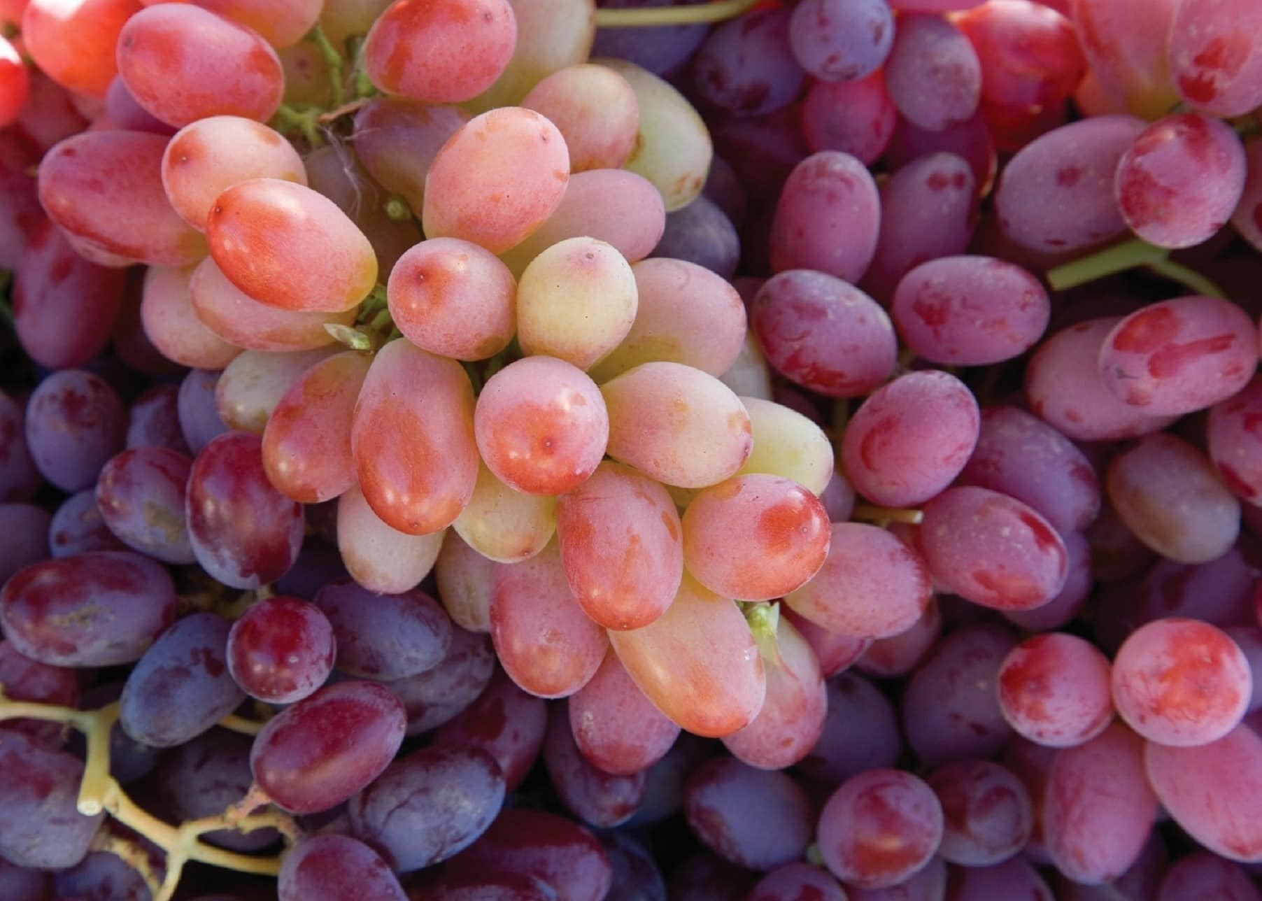 Free picture: viticulture, grape, fruit, food, grapes, market, berry, nutrition