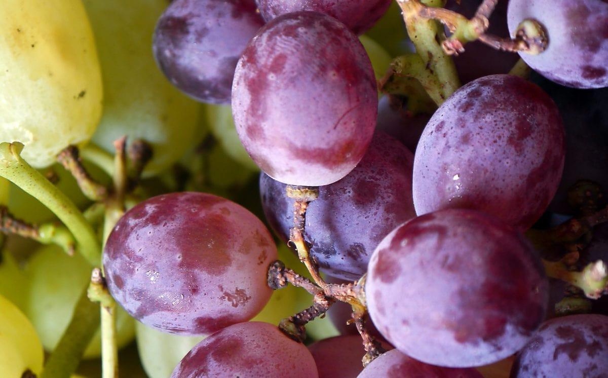 voedsel, vrucht, druif, Sweet, natuur, blad, wijnstok, druiven