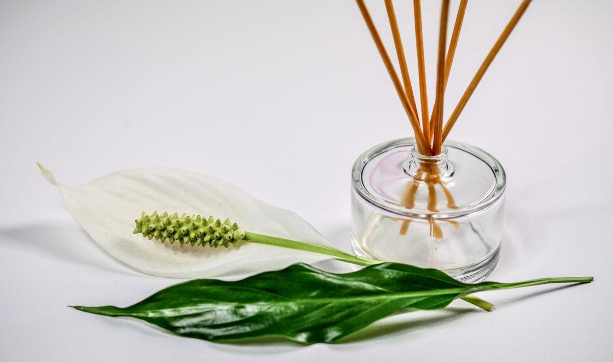 bottle, decoration, jar, still life, leaf, food, nature, herb