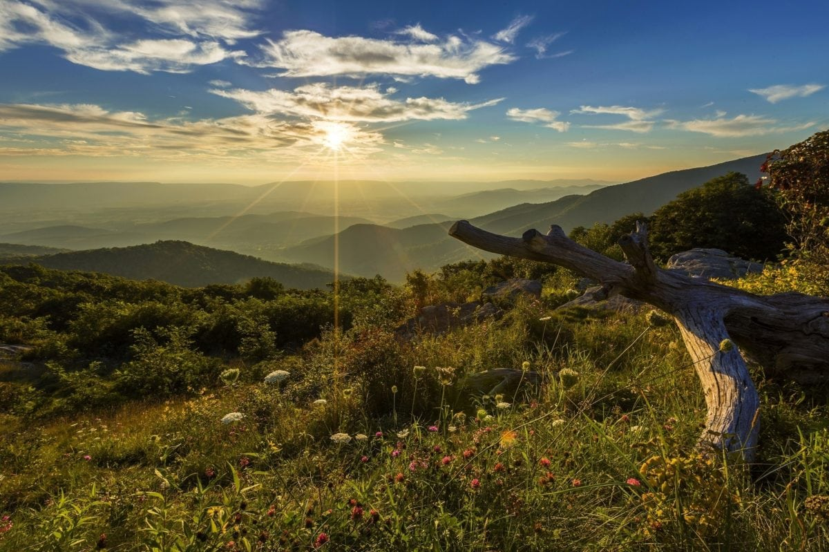 sunshine, landscape, field, grass, sky, Hemerocallis lilioasphodelus, sunset, nature