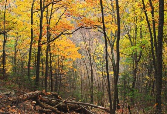 feuillage, bois, automne, arbre, Forest, feuille, nature, paysage