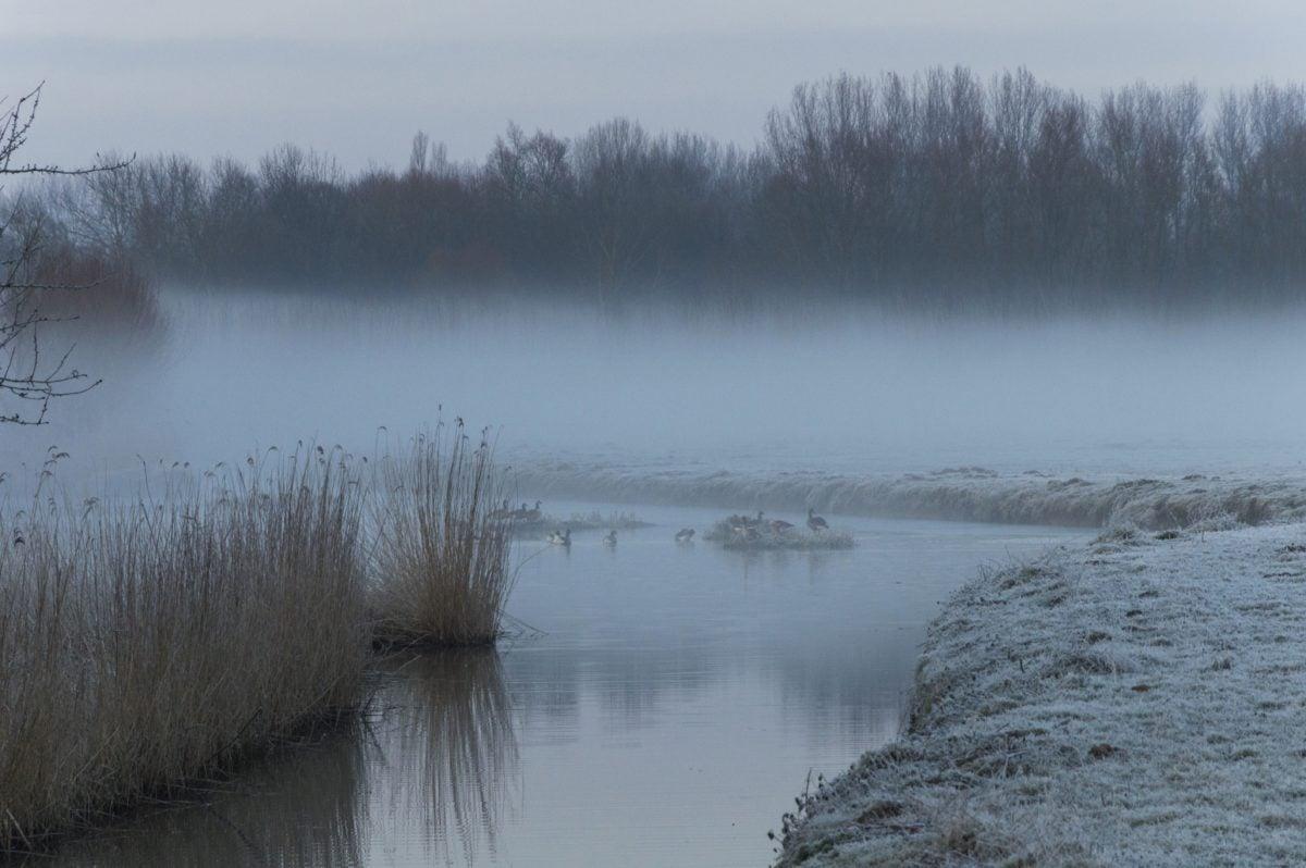 and-fugl, ælling, vand, landskab, vinter, skov, tåge, søen