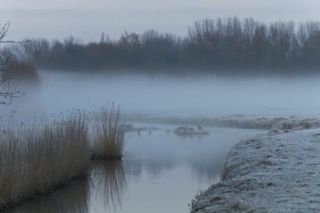 canard, caneton, eau, paysage, Hiver, Forest, brouillard, Lac