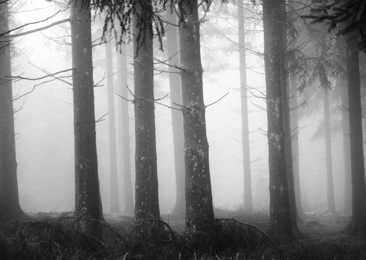 Nebel, Struktur, Holz, Nebel, Landschaft, Wald, Dämmerung, Geheimnis