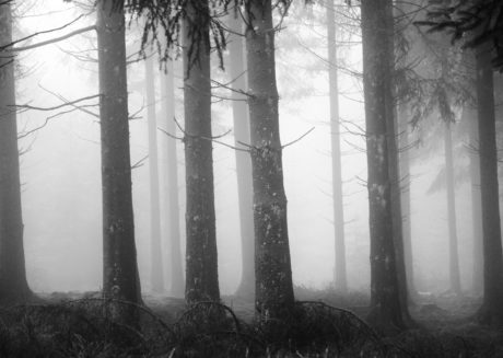 mist, tree, wood, fog, landscape, forest, dawn, mystery