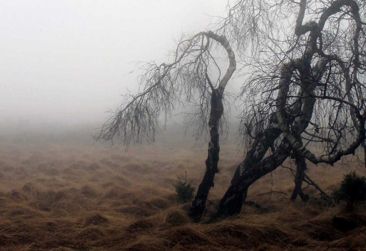 pemandangan, pohon, kabut, Fajar, kabut, alam, musim dingin, awan