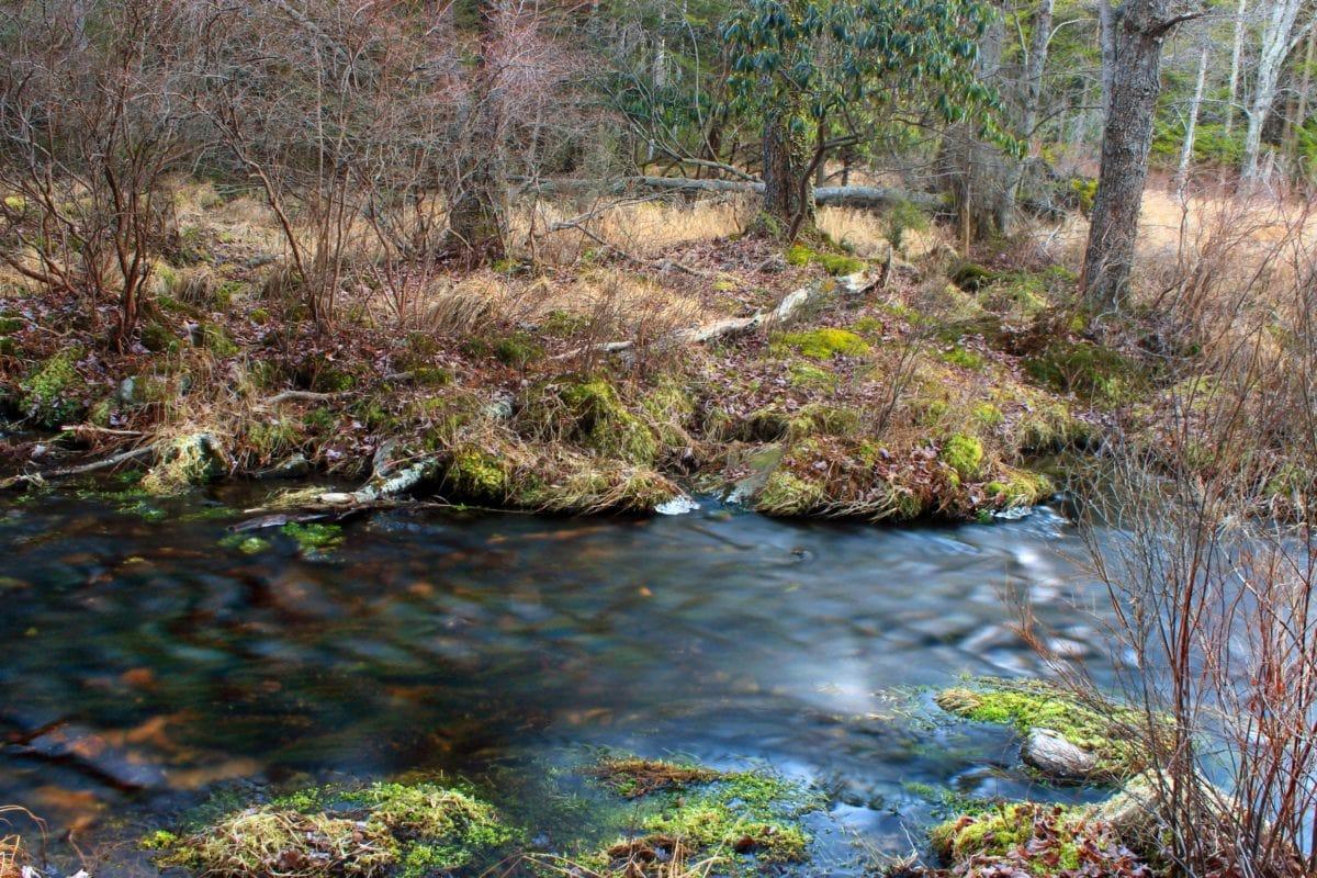 rawa, Sungai, air, pemandangan, alam, aliran, kayu, Tanah