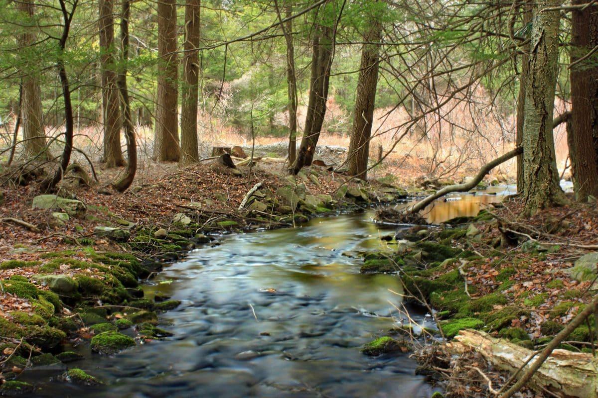 natur, træ, skov, blad, floden, landskab, jord, vand