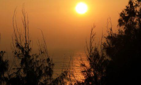 Gölge, günbatımı, Güneş lekesi, Güneş, Şafak, bulut, ağaç, doğa