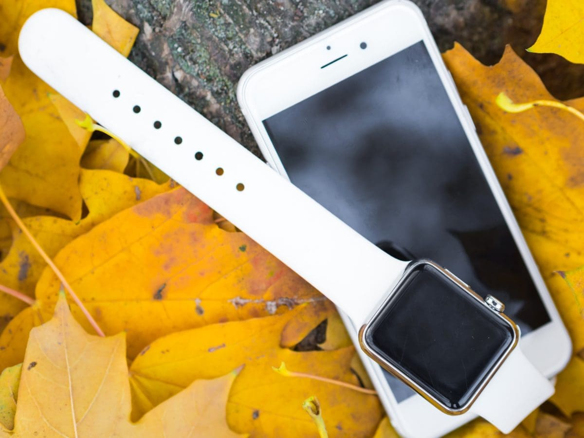 autumn, autumn season, wristwatch, business, technology, wood, outdoors, telephone