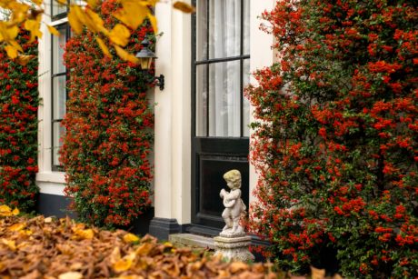 fall, shrub, plant, leaf, flower, garden, house, outdoors