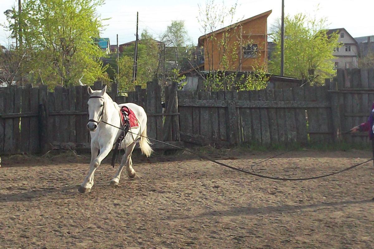 Mustang, landlig, landsbyen, hvit, dyr, hest, kavaleri, gjerdet