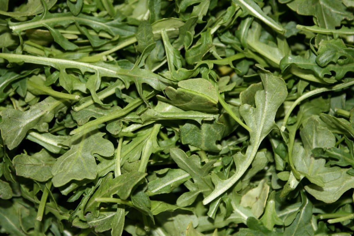 zeleni list, salata, zdrav, aromatični, povrća, hrana, list, biljka
