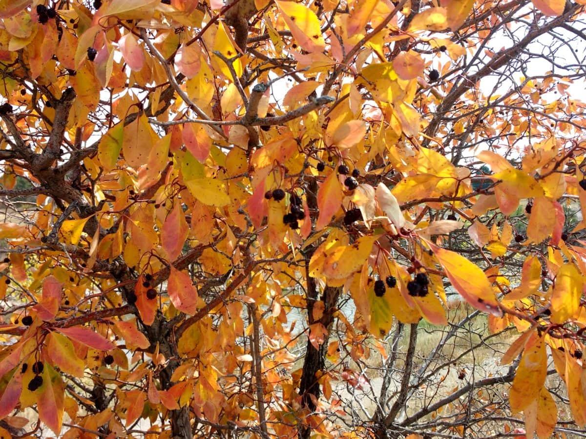 Herbst, Herbstsaison, Filiale, Strauch, Struktur, Saison, Anlage, Blatt