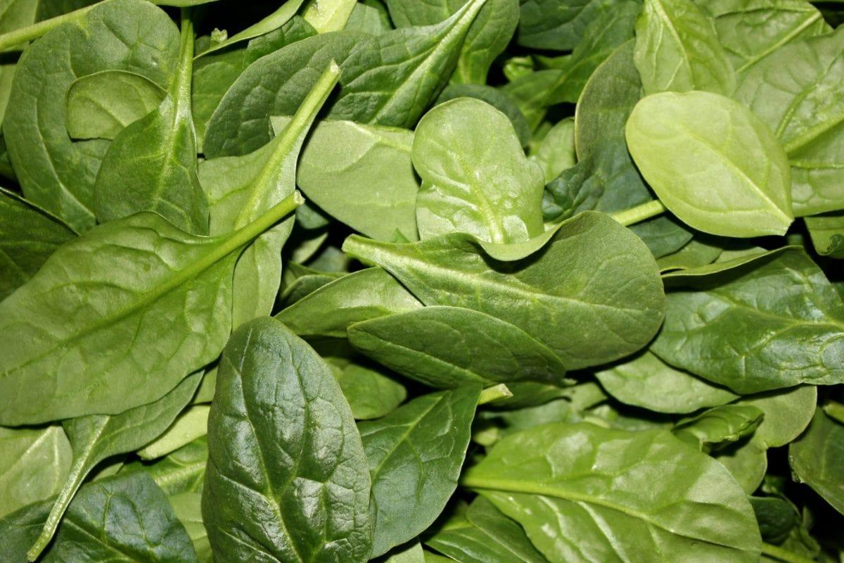 fresco, producir, hoja, espinacas, vegetales, alimentos, flora, saludable