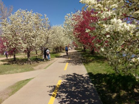 garden, people, road, spring time, autumn, cherry, tree, trees