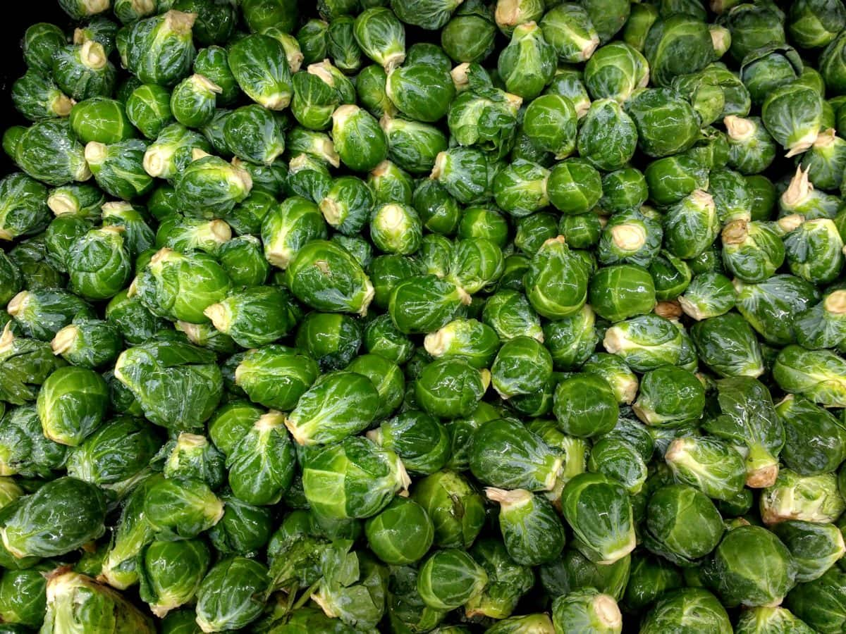 cabbage, vegetable, herb, produce, food, texture, grow, market