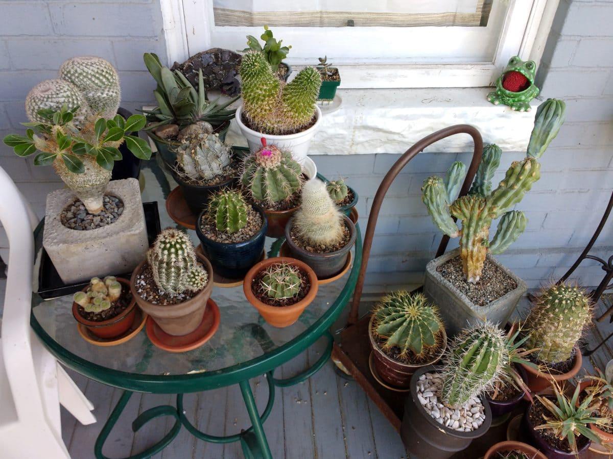 Kaktus, serambi depan, Mebel, pot, kontainer, dekorasi, bunga, flora