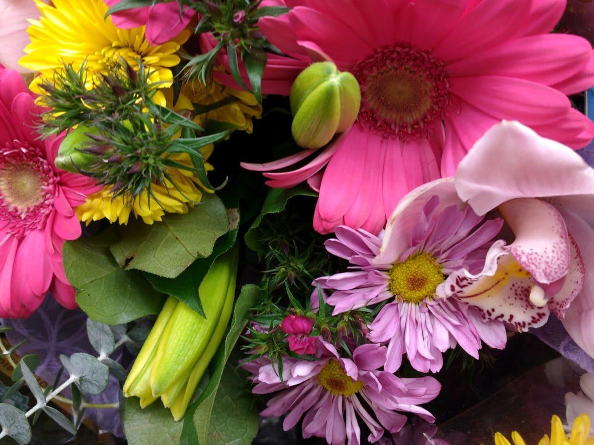 Blumenstrauß, Anordnung, Flora, Blumen, Dekoration, Natur, Blume, Blütenblatt