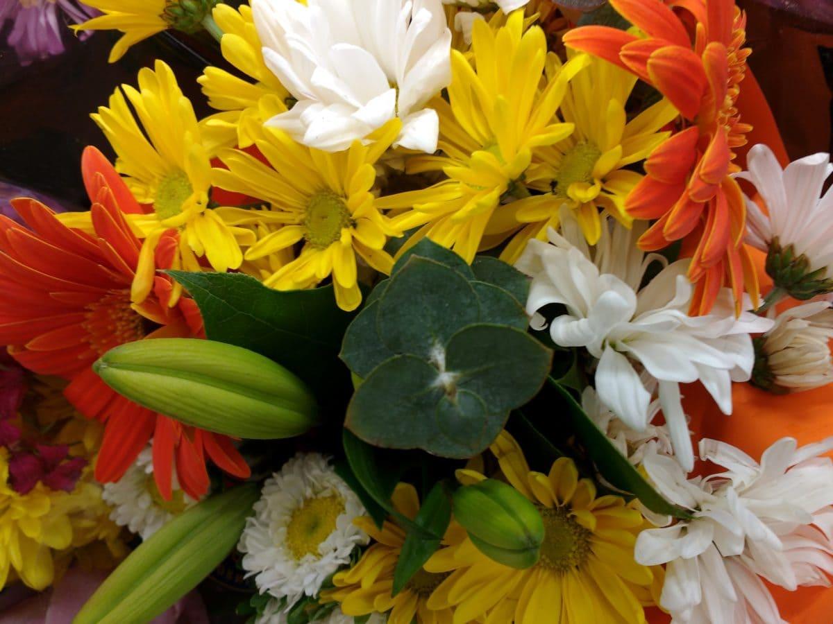 foto štúdio, usporiadanie, kvety, Kytica, príroda, kvet, rastlín, lupienok