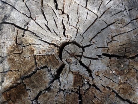 tree, texture, rough, wood, pattern, bark, hole, dry