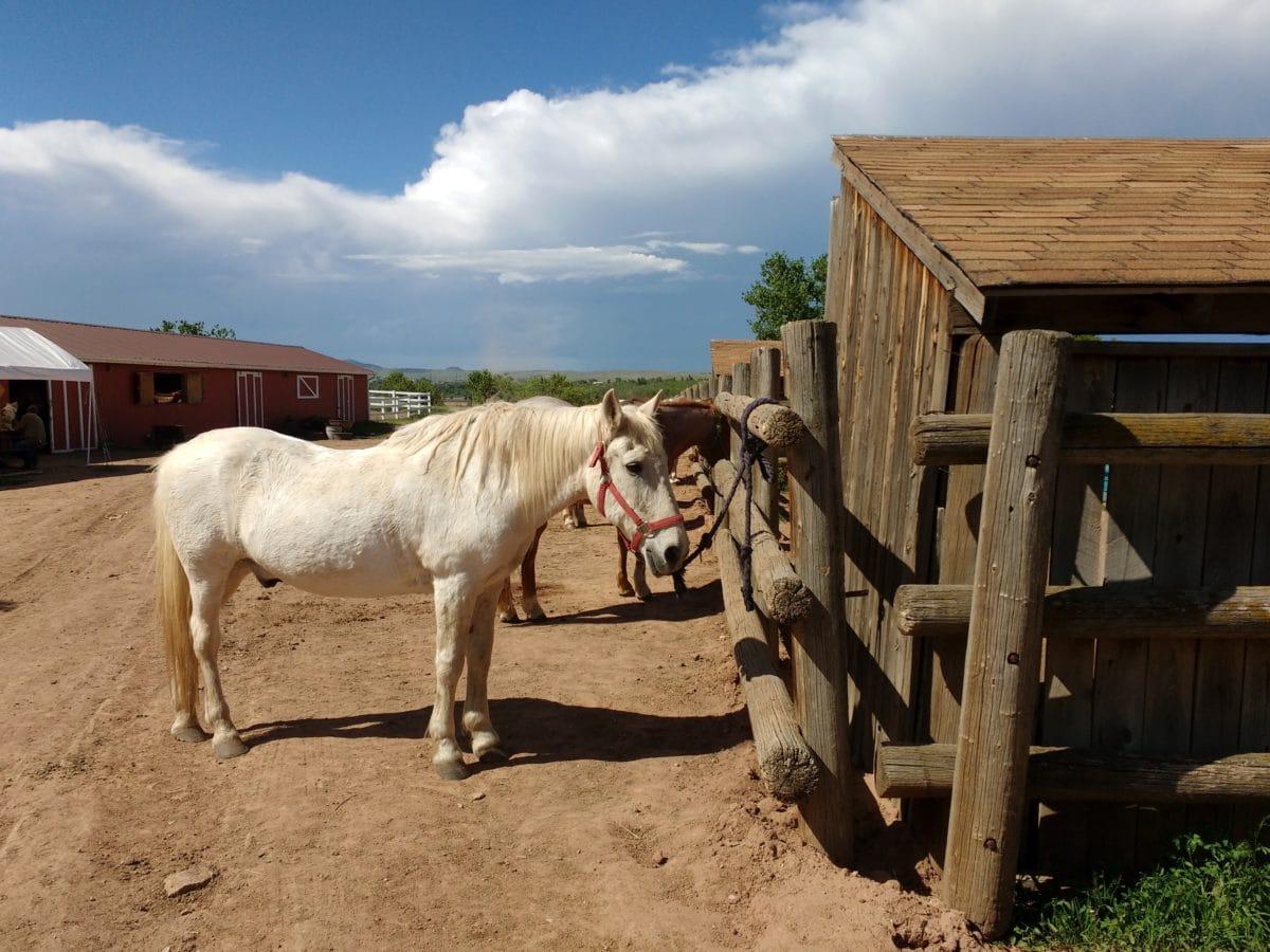 životinja, farma, ranč, konj, konjica, štale, ruralni, ograda
