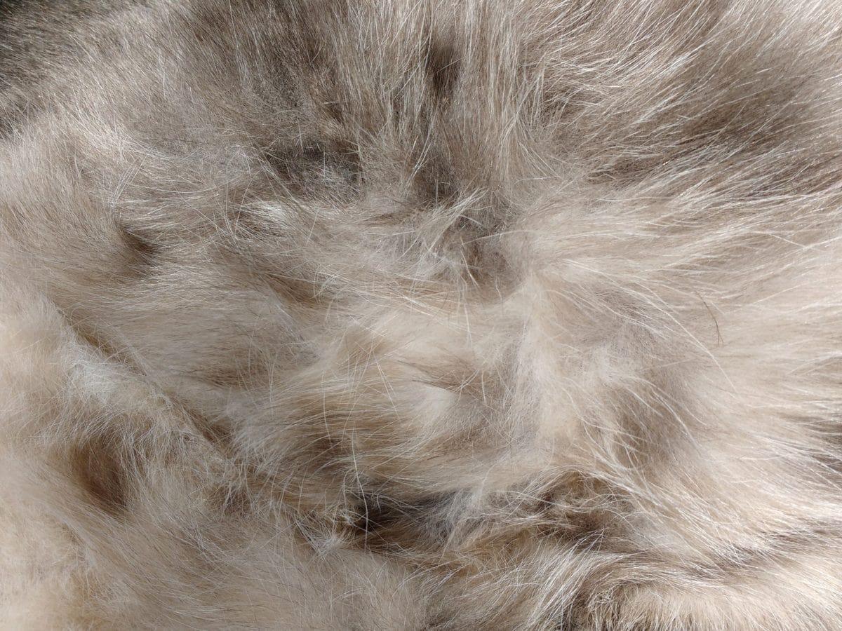djur, Päls, Husdjur, hår, Feline, lurviga, grå, Hårig