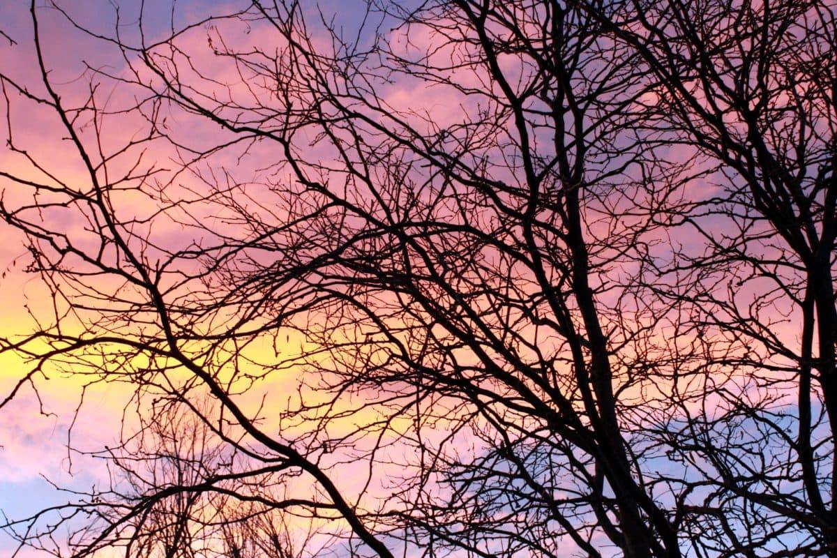 východ slunce, strom, větev, Les, dřevo, krajina, sezóny, Příroda