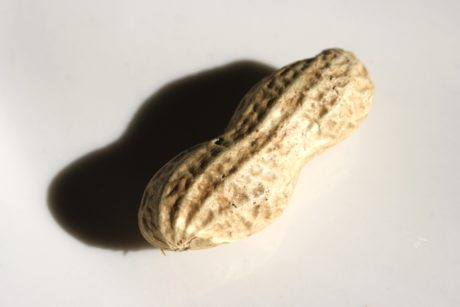 peanut, seed, shadow, food, still life, grow, nature, fruit