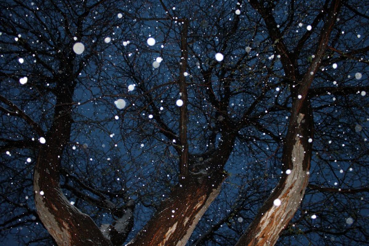zimowe, lasu, drzewo, drzewa, śnieg, Natura, krajobraz, drewno