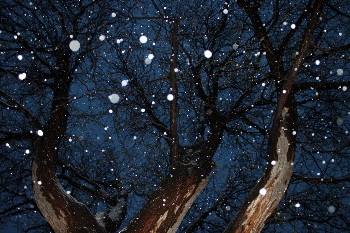 invierno, bosque, árbol, árboles, nieve, naturaleza, paisaje, madera