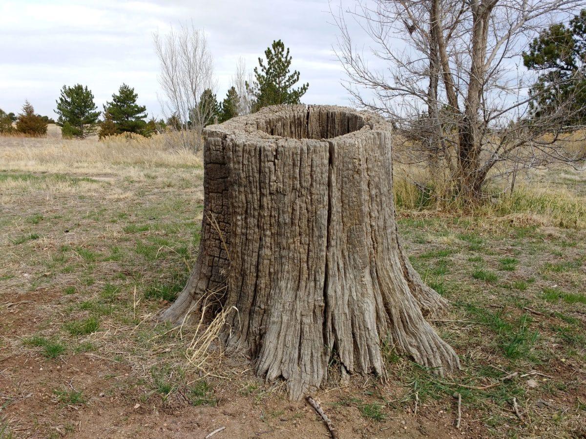 kořen, kořeny, Příroda, strom, dřevo, krajina, venkova, tráva